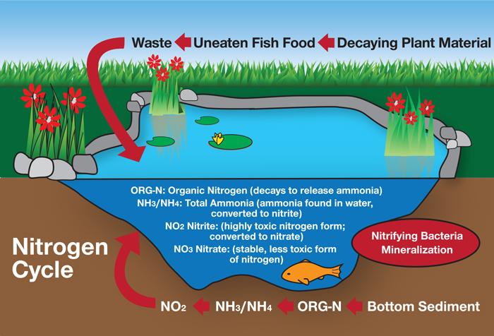 Rk2 Ponds Pond Water Quality