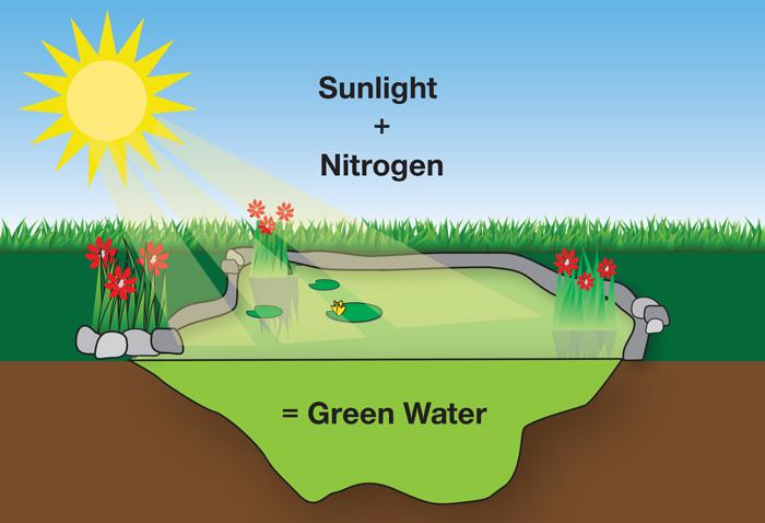 Rk2 Ponds Pond Green Algae